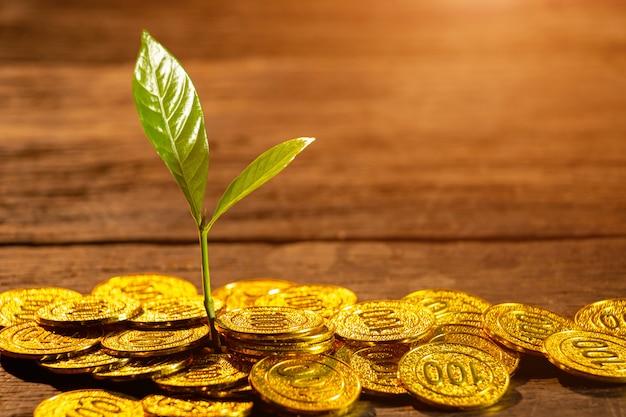若い植物と黄金のコイン。お金の成長増加のコンセプト。