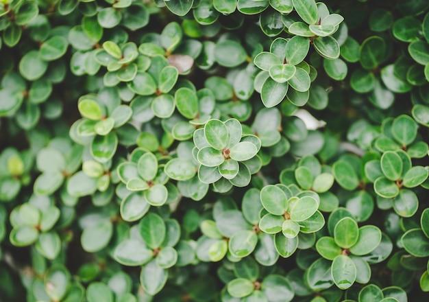 Взгляд природы крупного плана зеленых листьев.