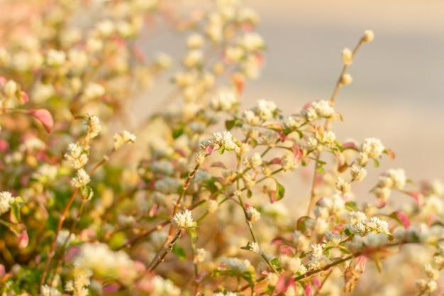 朝の白い花に太陽が輝いています。