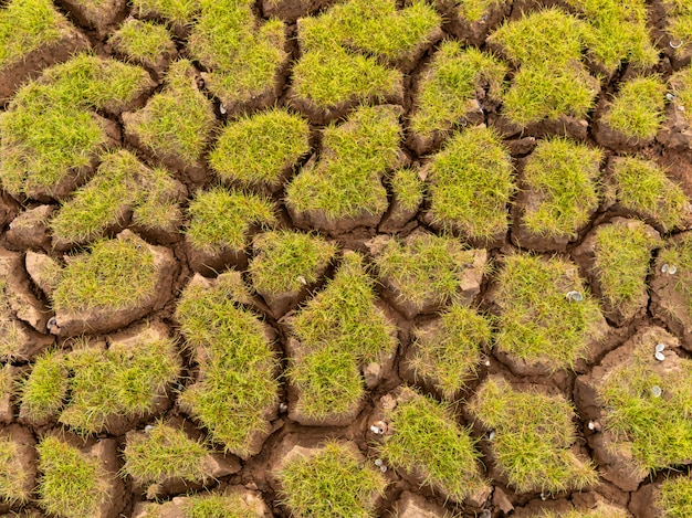 乾燥地と草のある土地は地球温暖化の背景を覆っていた
