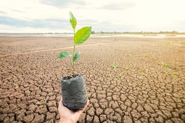 男性の手は、乾燥した場所に木を植えます。土壌は熱風で壊れます。テキスト入力用のスペースを確保する