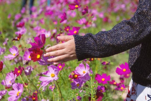 女性の手が庭でコスモスを捕まえた