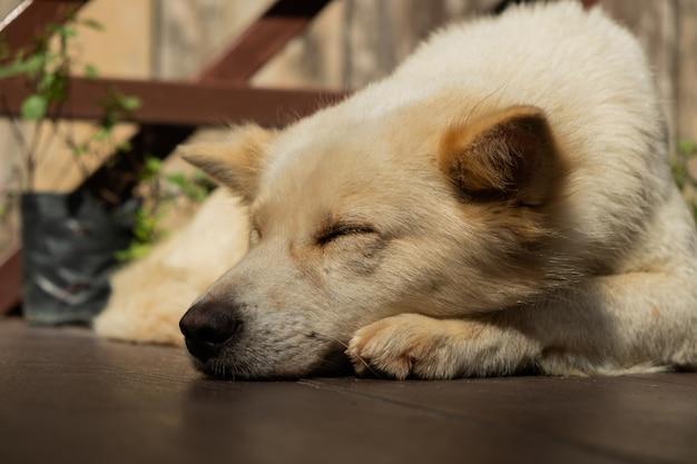 Собака спит в лучах утреннего солнца.