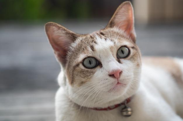 Закройте вверх по взгляду милого кота, селективному фокусу.