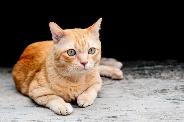 かわいいオレンジのタブビー太った猫は座って、興味のあるものを見ている。