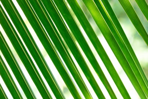 緑のココナッツの葉のパターン