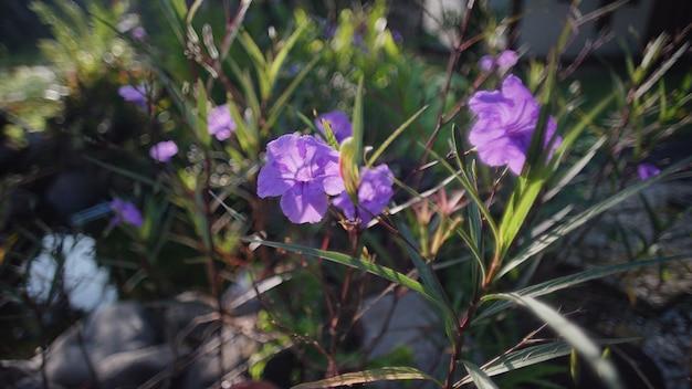 朝の紫色の花