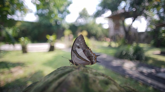 朝を蝶します。
