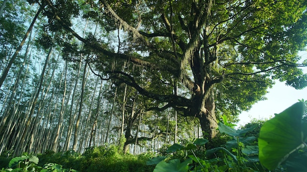 森の中の大きな木