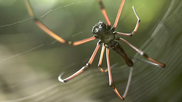 巣の中のクモ