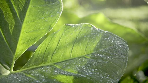 朝露の葉の上