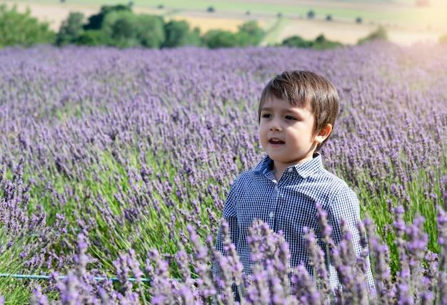 Селективный фокус маленький мальчик с улыбающееся лицо, стоя в сиреневом поле. портрет счастливый малыш, играя на открытом воздухе с размытыми цветами фона, ребенок с удовольствием в лавандовом саду в летнее время.