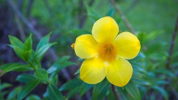 Цветы и листья в прекрасной природе для фона
