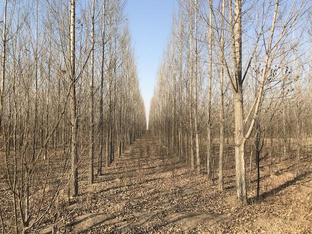 Осенние листья, осень, осенний лес. естественный путь к фону