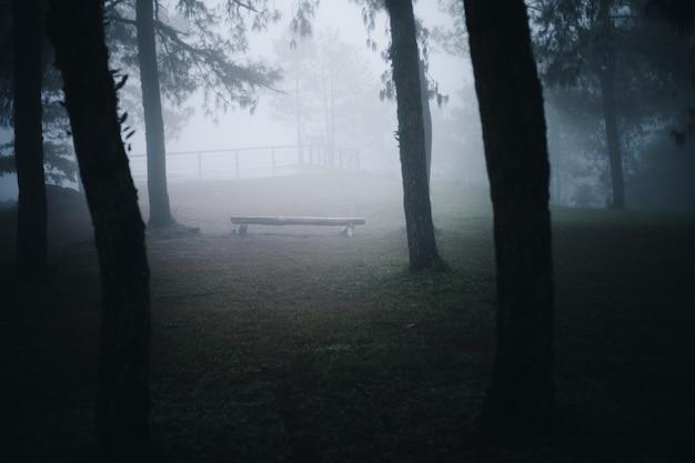 松林の中の霧