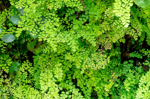 庭の質感と背景に緑のシダの葉