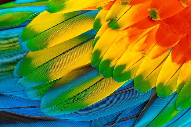 自然の背景に赤黄色オレンジ色の青とカラフルなコンゴウインコのオウムの羽