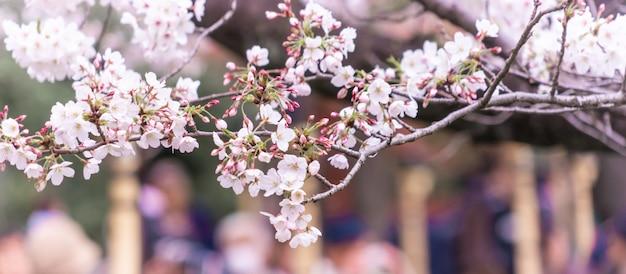 Закрытая съемка сакуры сакуры цветок и ветви