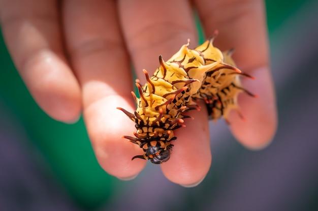 手にゾッと美しい黄色の毛虫