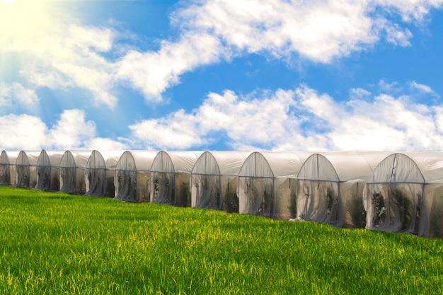 田んぼと青い空を背景に温室で水耕有機新鮮野菜の庭の農場。