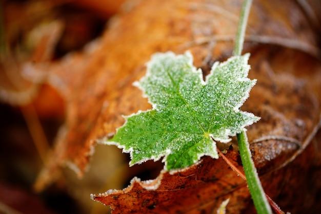冷凍秋の自然は、カラフルな赤、緑、黄色の葉を閉じます。
