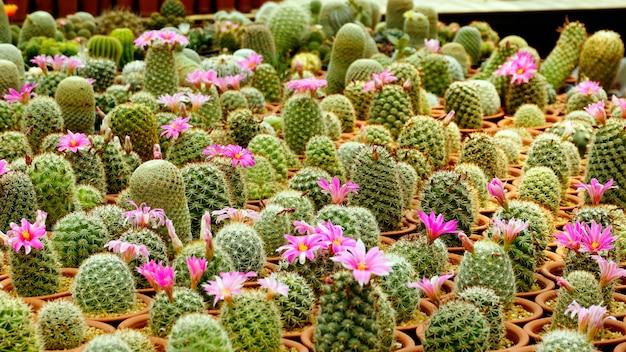 サボテンの植物種種保育園の中