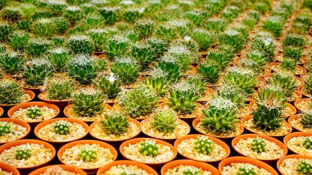 サボテンの植物保育園の中