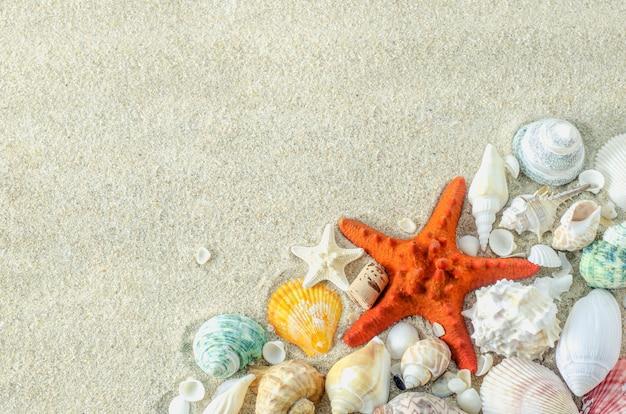 白い粗い砂で白い砂の背景にヒトデと貝殻を失う