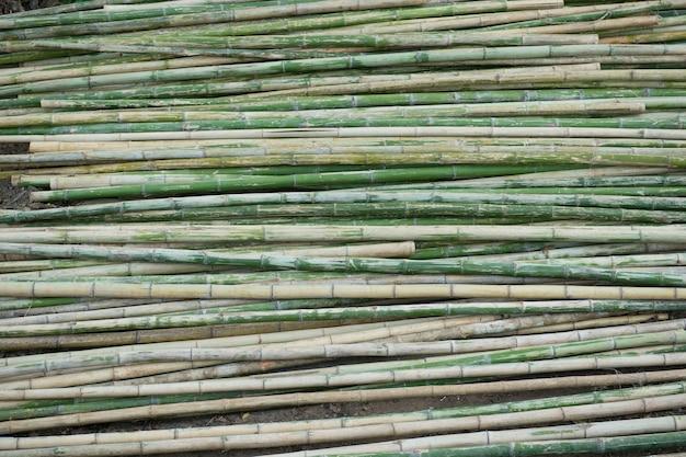 Вид ряда зеленого и коричневого бамбука в качестве фона