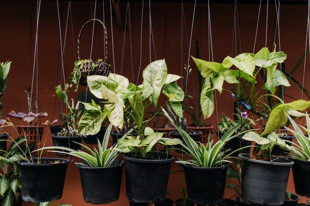 プラスチック製の鍋で緑のぶら下げ植物の様々な。