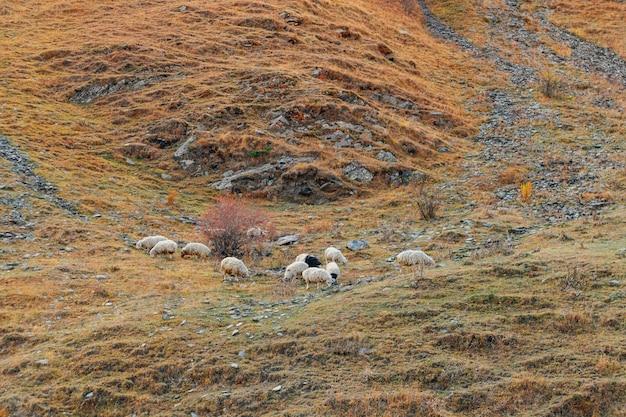 カラフルな山の丘に羊の群れ。