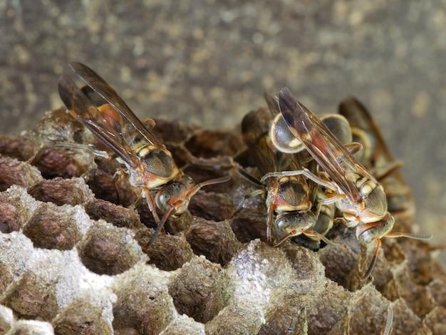 ハチの巣のハチミツ