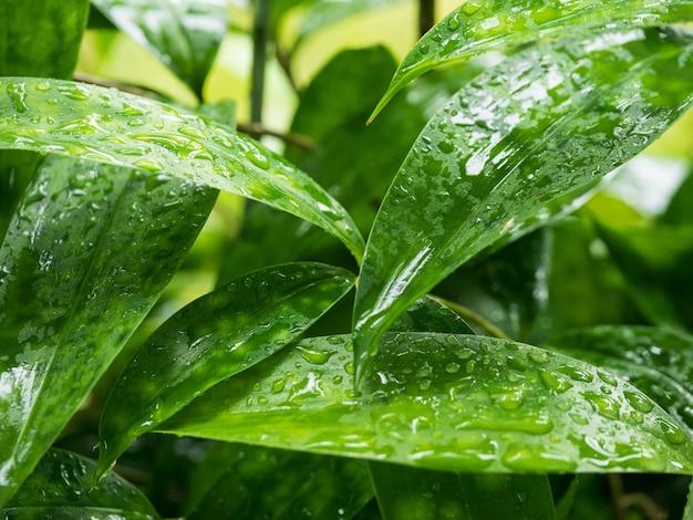 新鮮な緑の木の葉、自然の背景