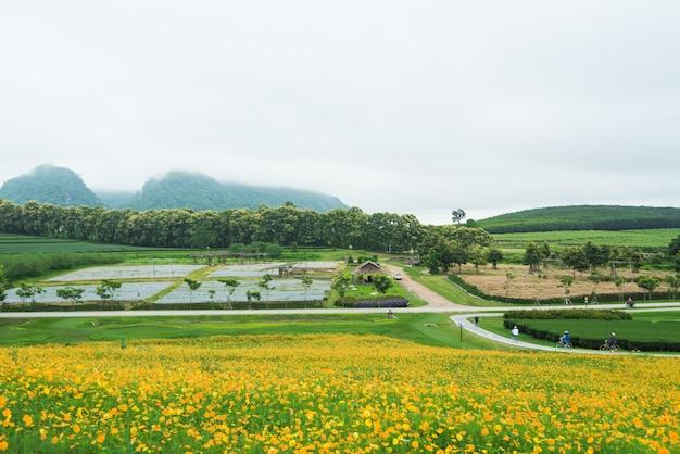 Желтые цветочные поля с горами и туманами