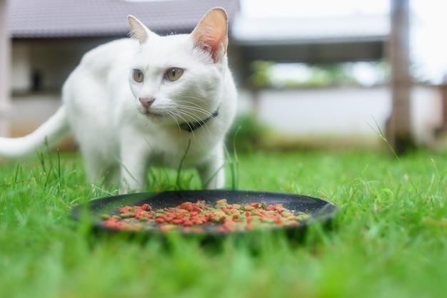 白い猫は草の上で食べる
