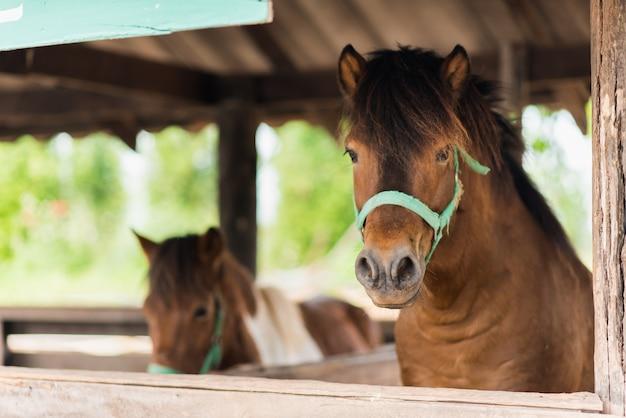 Закройте лошадь в клетке в зоопарке