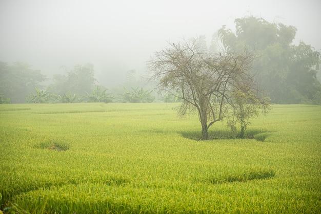 朝の経路と田んぼ