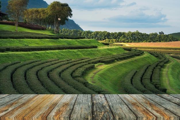 チェンマイ、タイの緑茶農場