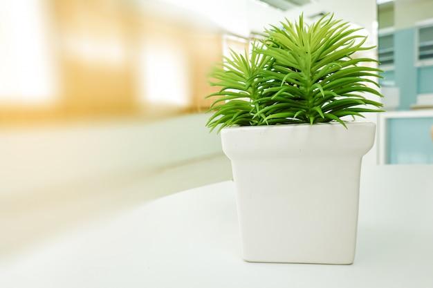 オフィスのテーブルの上の白い植木鉢に小さな緑の新鮮なビンテージツリー。