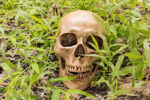 葉の背景に人間の頭蓋骨。