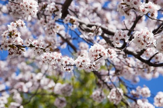 春の背景にアーモンドの花の詳細