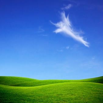 緑の芝生と明るい青空。