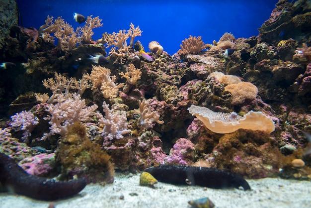 大阪の水族館のサンゴ