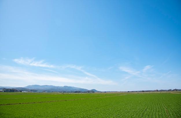 夏、青い空と美しい雲のための風景の背景