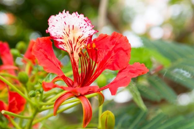 庭の孔雀の花。