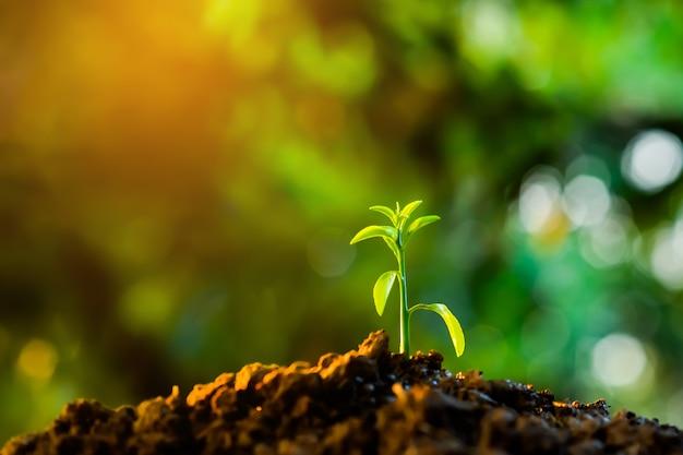 土中で苗が成長している
