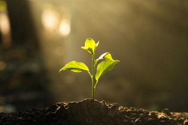 苗は太陽の光を背景に土壌で成長しています。