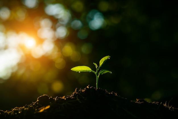 苗は太陽や日光を背景にして土壌に成長しています