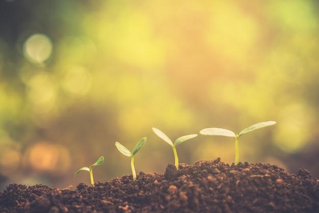 木の成長を示す植樹。