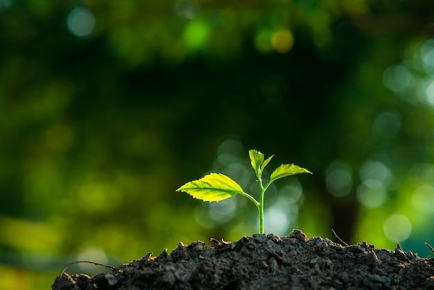 種まきは土と太陽の光の中で成長しています。地球温暖化を減らすための植林。